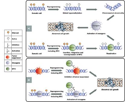 Stem Cells Buzz Stem Cells Portal Stem Cells Journal